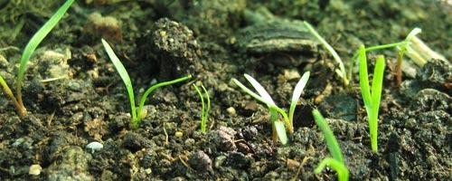 Nouvelle activité à la Durance : Jardinage